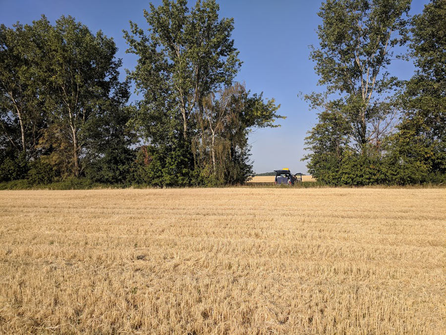 11404_Camping_am_Feldrand-mit-einem-Campingmobil-von-BulliHoliday